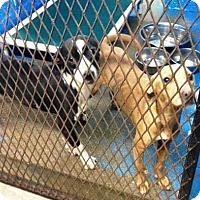 Adopt A Pet :: Ariel - St. Catharines, ON