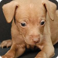 Adopt A Pet :: Lennon - Newland, NC