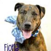 Adopt A Pet :: Fiona - Lake Havasu City, AZ
