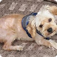 Adopt A Pet :: Astro - Leduc, AB
