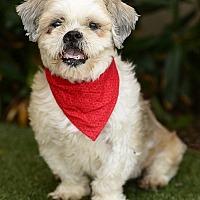 Adopt A Pet :: Wickett - Rancho Palos Verdes, CA