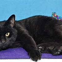 Adopt A Pet :: Pete & Parker - Lenexa, KS