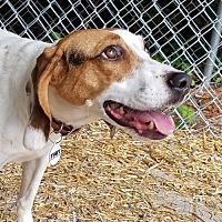 Adopt A Pet :: Flower - Waynesville, NC