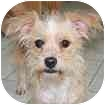 Terrier (Unknown Type, Small) Mix Dog for adoption in Hamilton, Ontario - Ruby