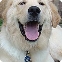 Adopt A Pet :: Timber *Adopted - Oklahoma City, OK
