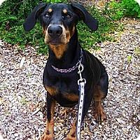 Adopt A Pet :: Ella - Jackson, MI
