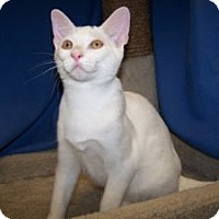 Adopt A Pet :: K-BARC1-Ace - Colorado Springs, CO