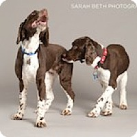 Adopt A Pet :: Sadie and Suzie - Minneapolis, MN