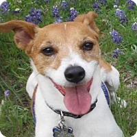 Adopt A Pet :: Morley in Dallas - Dallas/Ft. Worth, TX