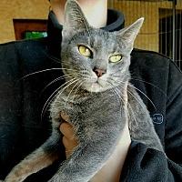 Adopt A Pet :: Purrl - Arlington/Ft Worth, TX