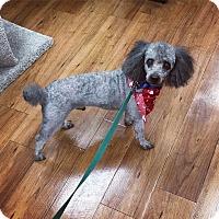 Adopt A Pet :: Jack - Davie, FL