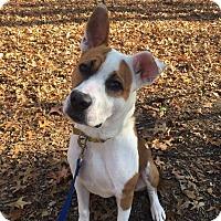 Adopt A Pet :: Trevor - Walden, NY
