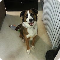 Adopt A Pet :: Murphy (COURTESY POST) - Baltimore, MD