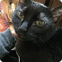 Adopt A Pet :: Mokabe - St. Louis, MO