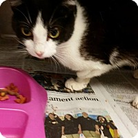 Adopt A Pet :: TRIPOD - Cleveland, MS