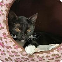 Adopt A Pet :: Yang - Bloomingdale, NJ
