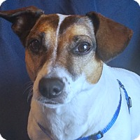 Adopt A Pet :: Josie - San Francisco, CA