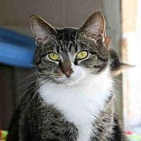 Adopt A Pet :: JUNIOR - Fort Walton Beach, FL