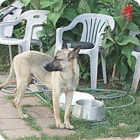 Adopt A Pet :: Max - Dripping Springs, TX