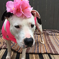 Adopt A Pet :: Leah - Kittery, ME