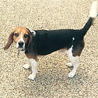 Adopt A Pet :: Abbott - Houston, TX