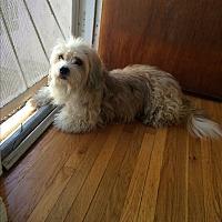 Adopt A Pet :: Donna - San Dimas, CA