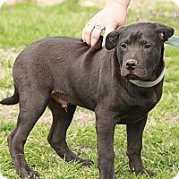 Adopt A Pet :: Max $300 adoption fee - Ocala, FL