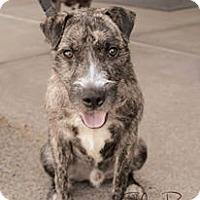 Adopt A Pet :: Sulley - Atlanta, GA