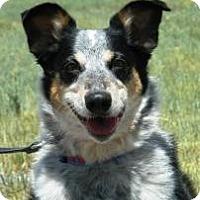 Adopt A Pet :: BB - Cheyenne, WY