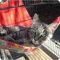 Adopt A Pet :: Pi - Modesto, CA
