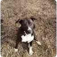 Adopt A Pet :: Maggie May - Adamsville, TN