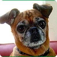 Adopt A Pet :: JADALEE - ADOPTION PENDING - Los Angeles, CA