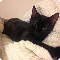 Adopt A Pet :: Kiara - Chicago, IL