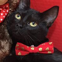 Adopt A Pet :: Ronni - Houston, TX