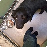 Adopt A Pet :: Oso - South Haven, MI