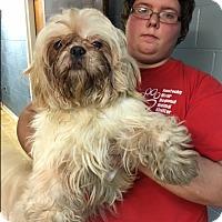 Adopt A Pet :: Bentley - Hazard, KY
