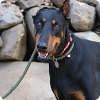 Adopt A Pet :: Princessa - Fillmore, CA