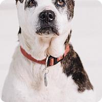Adopt A Pet :: Mabel - Portland, OR