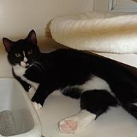 Adopt A Pet :: Jayden - Golden Valley, AZ
