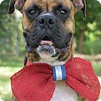 Adopt A Pet :: Bruno - Denver, CO