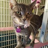 Adopt A Pet :: SNUGGLES - Hazlet, NJ