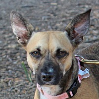 Adopt A Pet :: Gloria - Walnut Creek, CA