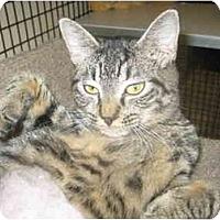 Adopt A Pet :: Charlotte - Deerfield Beach, FL