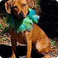 Adopt A Pet :: Daisy Mae - Bartow, FL