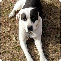 Adopt A Pet :: Patches - Glenpool, OK