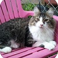 Adopt A Pet :: Paige - Anchorage, AK