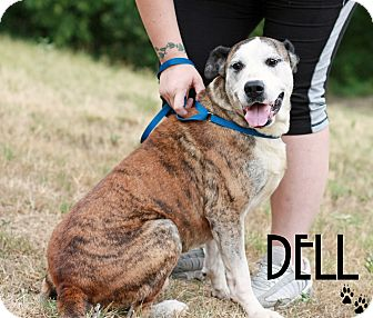 Boxer Mix Dog for adoption in Everman, Texas - Dell