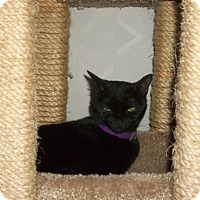 Adopt A Pet :: Courtesy Post_Matilda - Columbia, MD