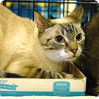 Adopt A Pet :: Katness - Pittstown, NJ