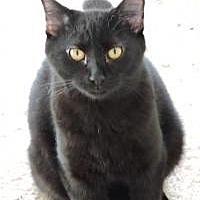 Adopt A Pet :: Abe - Southlake, TX